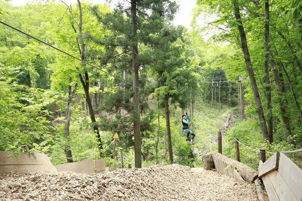 02-21_forest.jpg